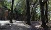 sesta forestega