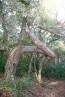 Pins recargolats anaconda