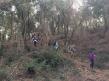 caminant pel bosc vell 1