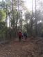 caminant pel bosc vell 2