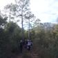 caminant pel bosc vell 3